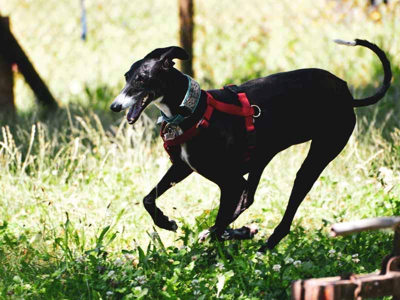 Forza Rescue Dog centro rescue